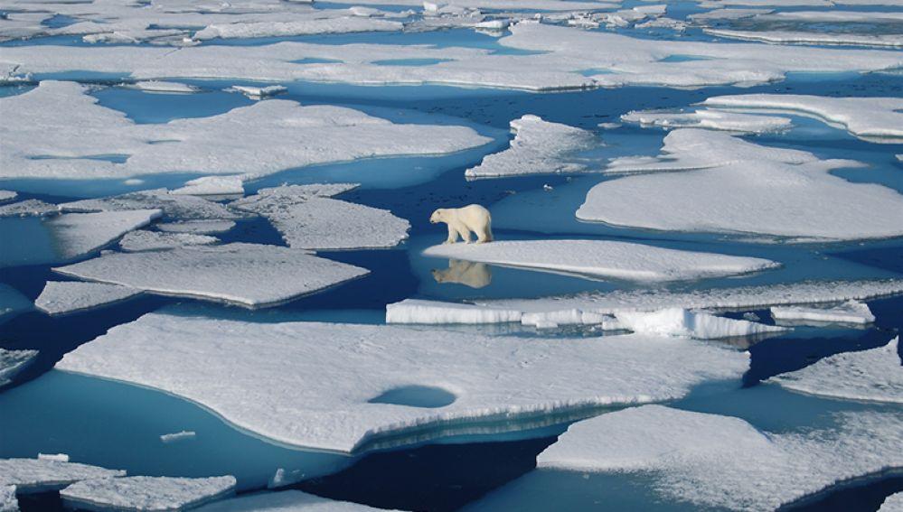 20,7 gradi in Antartide, una disperata richiesta di aiuto lanciata dal pianeta