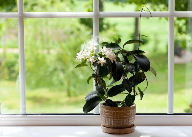 Inquinamento domestico, quanto sono affidabili i purificatori d'aria?